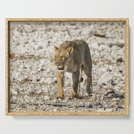 Lioness on the Move Serving Tray