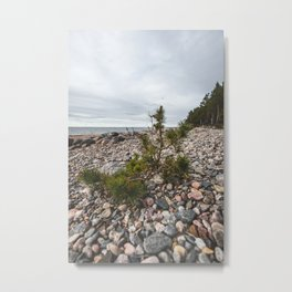 Pine tree | Nature Shots | Rocks | Pebbles | Beach Rocks | Baltic Sea | Vertical | Photography Artwork | Latvia | Kurzeme | Small tree |  Metal Print