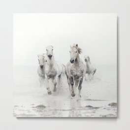 Camargue White Horses Running in Water - Nature Photography Metal Print