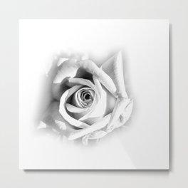 Rudolf's Rose Metal Print