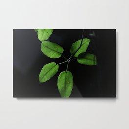 Black on green Metal Print