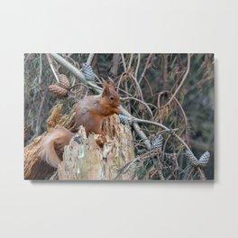 woodland delights Metal Print