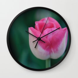 Beautiful Pink Tulip Wall Clock