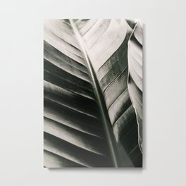 Banana Leaf | Moody Jungle travel photography | Botanical green plant, Strelitzia nicolai  Metal Print