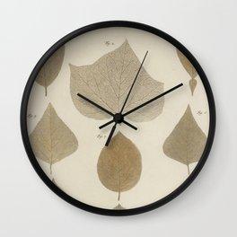 Various Tree LEAVES by Albertus SEBA Wall Clock