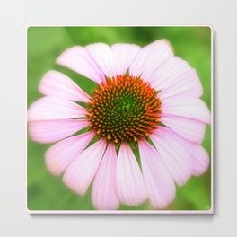 Pink Flower | Nadia Bonello Metal Print