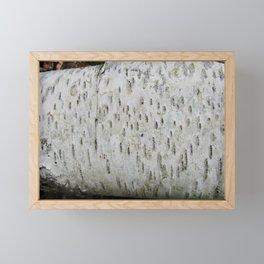 Birch Bark on a Fallen Tree Framed Mini Art Print