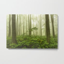 Dreaming of Appalachia - Nature Photography Digital Landscape Metal Print