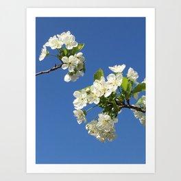 Cherry Blossom 2 - Series Art Print