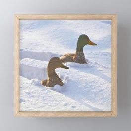 Ducks Swimming in Snow Framed Mini Art Print