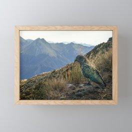 Kea, Fiordland National Park Framed Mini Art Print