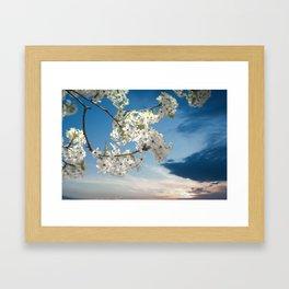 Pear Blooms at Sunset Framed Art Print