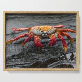 Sally Lightfoot Crab Serving Tray