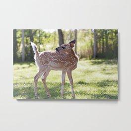Fallow Deer Fawn 1 Metal Print
