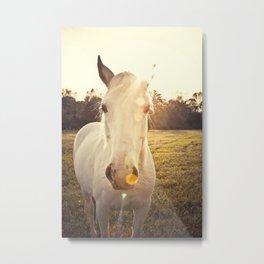 Sunlit Horse Metal Print