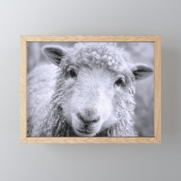 Ready For Your Closeup? Icelandic Sheep Face Framed Mini Art Print