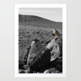 Desert Bird No 1 Art Print