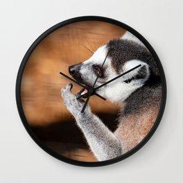 Ring tail lemur eating Wall Clock