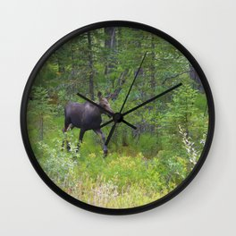 Moose calf emerges from the forest in Jasper National Park Wall Clock