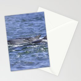 Dolphin calf Stationery Cards