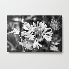 White Lily of the Nile - Black & White Metal Print