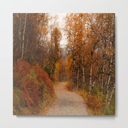 Winding country road in a fall forest Metal Print