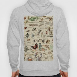 Vintage Insect Identification Chart // Arthropodes by Adolphe Millot XL 19th Century Science Artwork Hoody