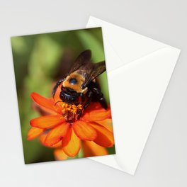Bumblebee On Zinnia Stationery Cards