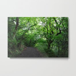 Enchanted Forest - Study V Metal Print