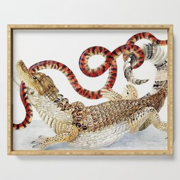 Spectacled Caiman and a False Coral Snake by Maria Sibylla Merian c.1705-10 // Wild Animals Decor Serving Tray