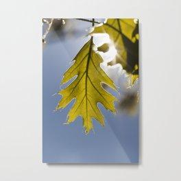 young oak foliage Metal Print
