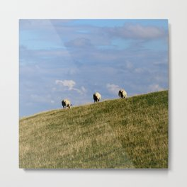 Rear view of three Sheep grazing on a hill Metal Print