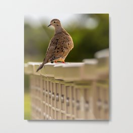Mourning Dove Mail Call Metal Print