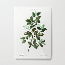 Cork oak (Quercus suber) from Traité des Arbres et Arbustes que l'on cultive en France en pleine ter Metal Print