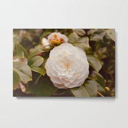 Camellia - White Metal Print