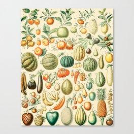 Autumn Harvest // Fruits by Adolphe Millot XL 19th Century Pumpkins Science Textbook Artwork Canvas Print