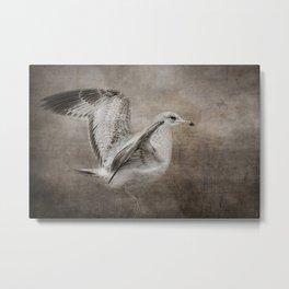 Dance of the Lone Gull Metal Print