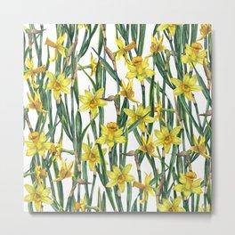 Spring's fragrances. Narcissuses. Metal Print