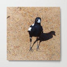 Black and White Magpie Bird Metal Print