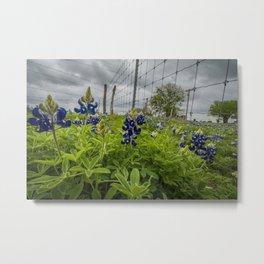 texas bluebonnets II Metal Print