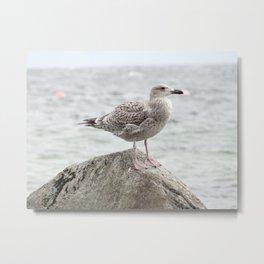 Seagull sitting on a rock Metal Print
