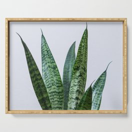 Snake plant Serving Tray
