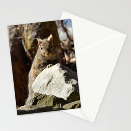 Cute Squirrel by Teresa Thompson Stationery Cards
