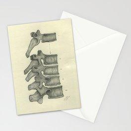 Anatomy: Thoracic Vertebrae Stationery Cards