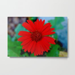 Hello Beautiful!  Metal Print