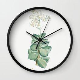 Crassula Lactea (Taylors Parches) from Histoire des Plantes Grasses (1799) by Pierre-Joseph Redoute Wall Clock