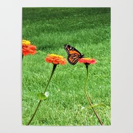 The Liberty Of A Butterfly Poster
