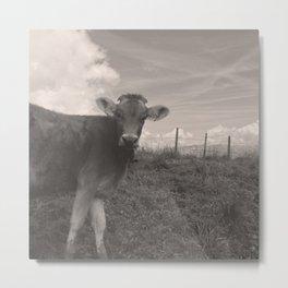 vintage cow Metal Print