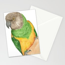Watercolor bird - senegal parrot Stationery Cards