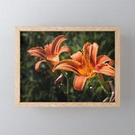 Orange Yellow Fire Lily Flower Framed Mini Art Print